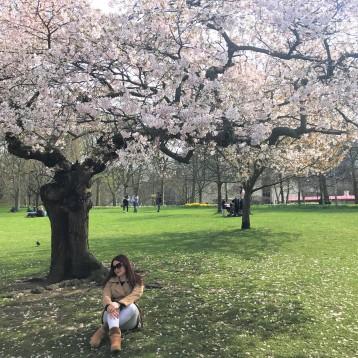 Cherry Blossoms en Inglaterra